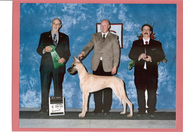 http://www.illinigreatdaneclub.com/Best_Puppy_in_Regular_Classes_Specialty_II.jpg